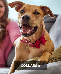 Shop Petco collars