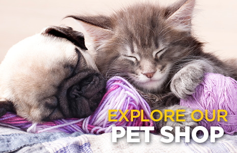 Explore Our Pet Shop